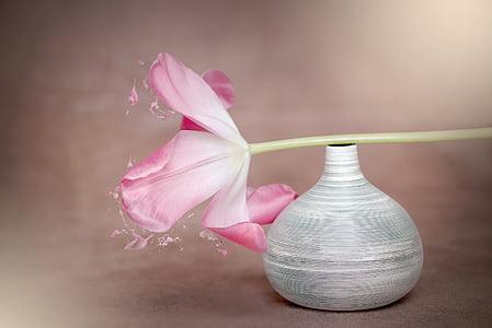 fiore, tulipano, rosa, tulipano rosa, fiore di primavera, fiore rosa, schnittblume