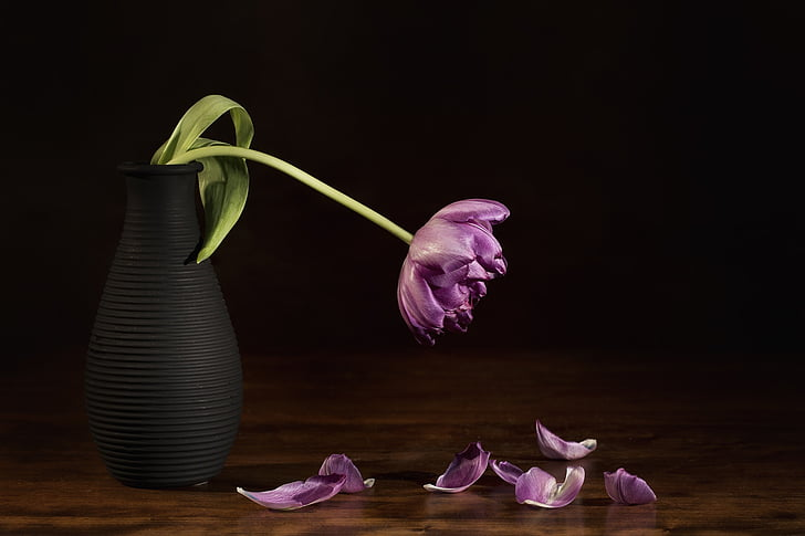 nature morte, fleur, Tulip, nature morte, nature, flore, vase