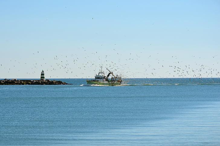 Portekiz, Deniz, balıkçı teknesi, Balık tutma, Balık, gemi, Martılar