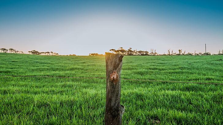 Trang trại, cỏ, lĩnh vực, đường chân trời, mùa xuân, chăn nuôi, vùng nông thôn