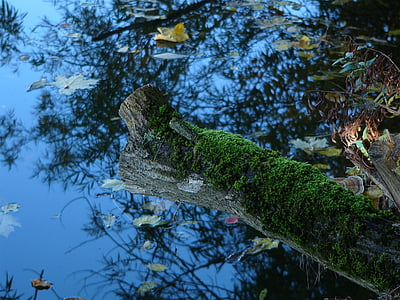 nature, mood, lake, bank, water, river landscape, river