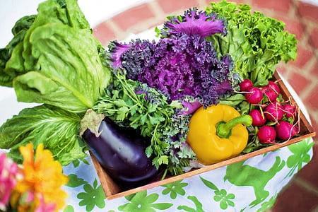 vegetables, garden, harvest, organic, green, gardening, lettuce