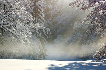 winter, wintry, snow, snow landscape, snowy, fog snow trail, snow meadow