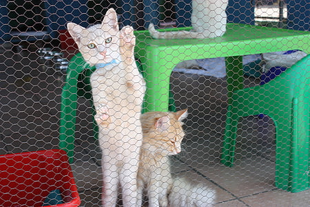 cat, kennel, cute cat, animal, cat's eyes, animals