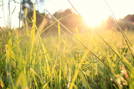 grass, sunset, summer, nature, meadow, outdoors, plant