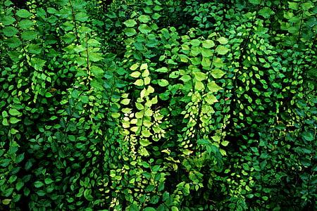 leaf, foliage, plants, growth, roadside, wall of leaves, nature