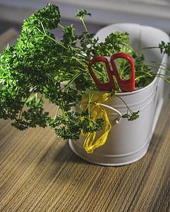 herbes, Tall, tisores, aliments, fresc, tallar, ingredient