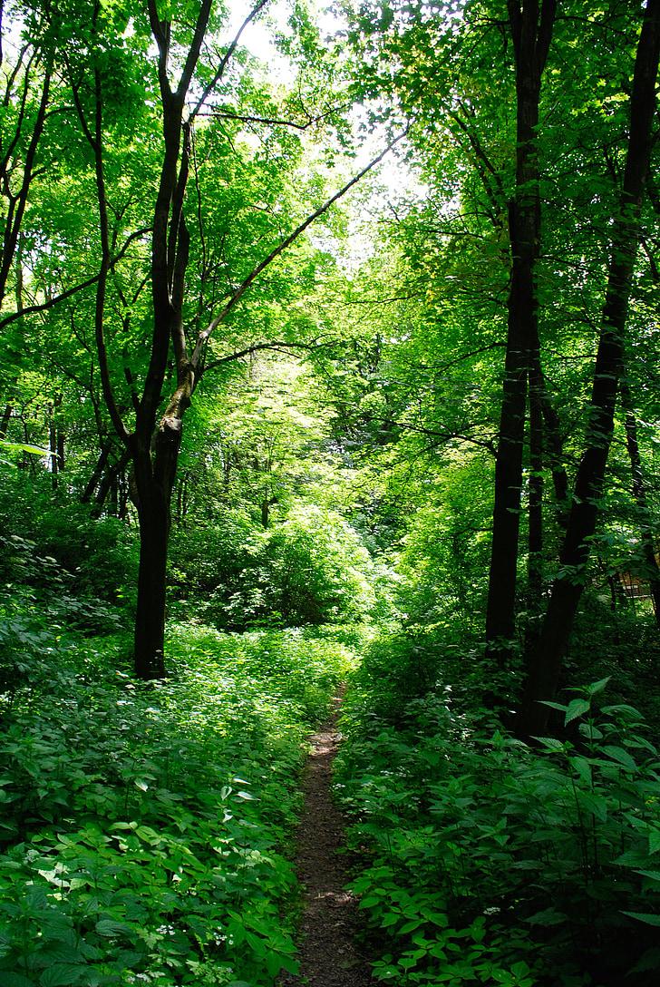 skogen, träd, skugga, lövverk, skogar, landskap, naturen