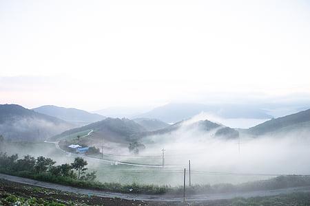 Gediminas Valdas, Gangneung, rūkas, kopūstų sode