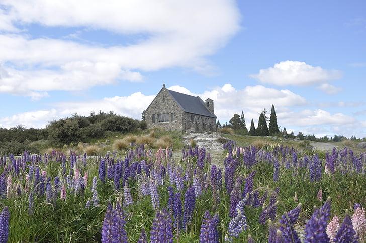 tekapo, new zealand, church, lupins, stone church, flowers, beautiful church