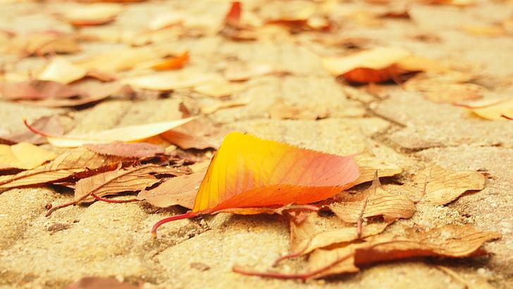 autumn leaves, street, the leaves