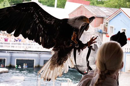 adler, flight, swing, raptor, bird of prey, fly, animal