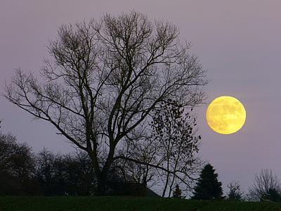 Lluna, Lluna plena, Moonrise, nit, crepuscle, llum de lluna, arbre