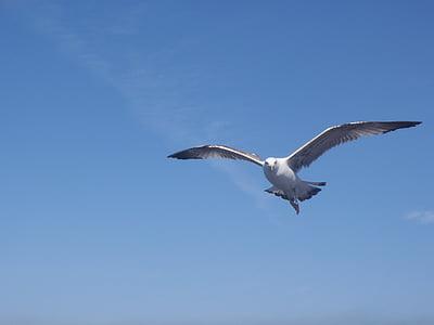 bird, seagull, istanbul