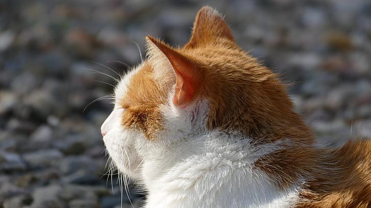 cat, sun, light, relaxed, peaceful, mieze, heat