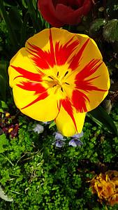 kevadel, lilled, Bloom, kroonlehed, loodus, Aed, Kevadlilled
