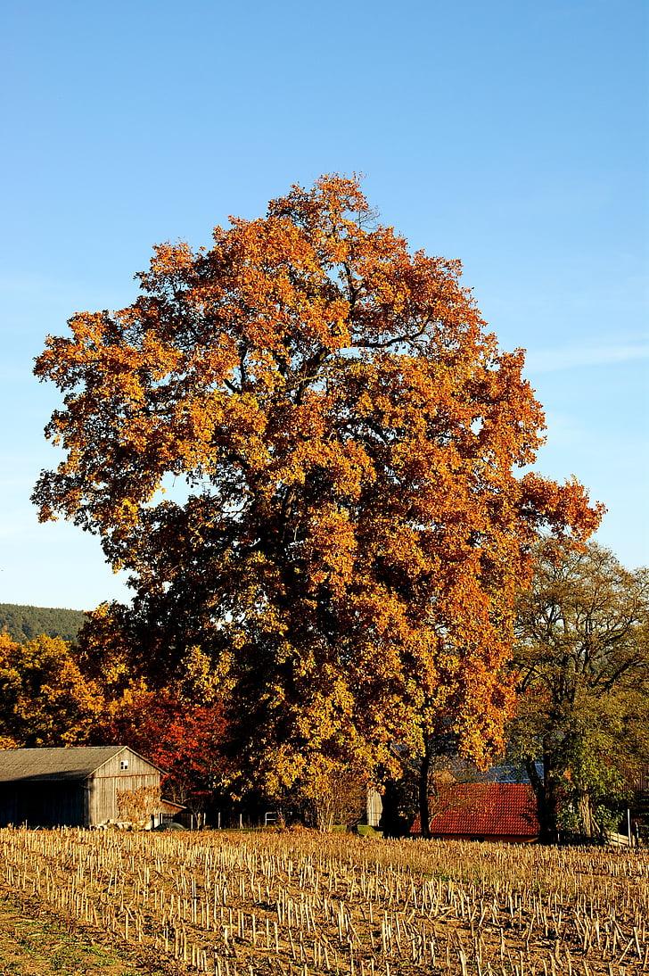 tardor, arbre, colors, fulles, tardor daurat, colors de la tardor, estat d'ànim