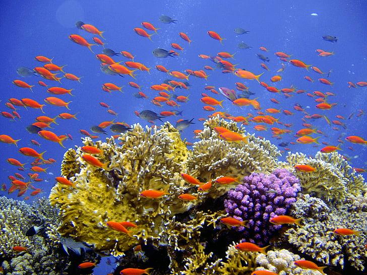 diving, underwater, reef, coral, banners harsh, underwater world, water