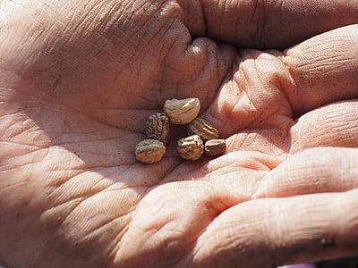 seemned, lilleseemned, vt, külvi, mungalill, käsi, aednik