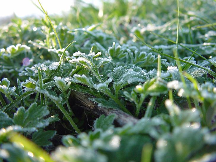 herba, herba verda, natura, planta, fulles d'herba, macro, close-up