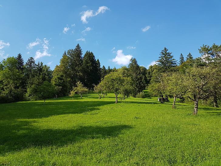 fruit trees, spruce, summer meadow, meadow, pasture, sky, mountain meadow