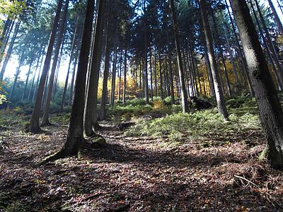 forest, mood, autumn, nature, light beam, light, tree
