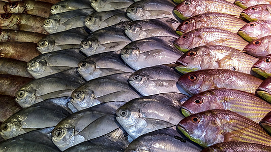 fish, display, fishes, marine, seafood, food, fresh