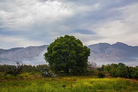 tree, field, landscape