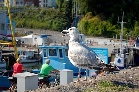 seagull, port, waterfowl, close, lake