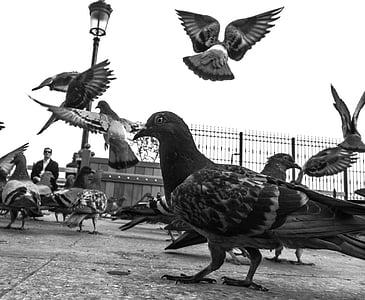 holub, vták, zviera, Príroda, pero, zvieratá, Sky