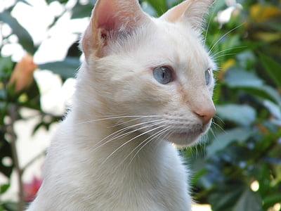 cat, pet's, feline