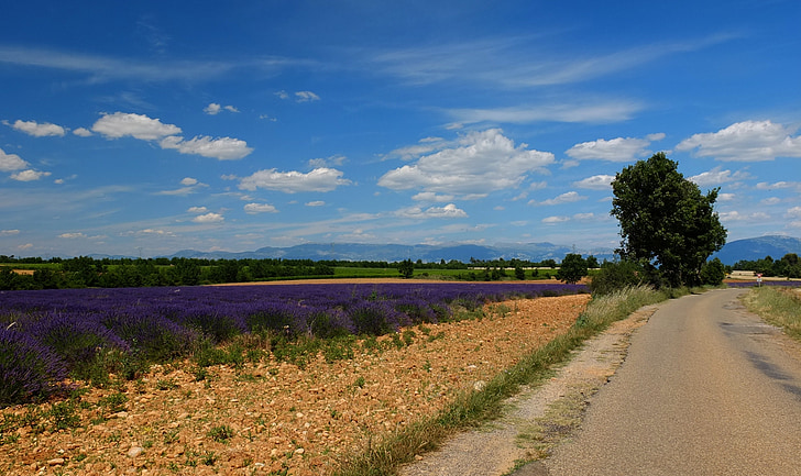 away, road, lavender, france, provence, south of france