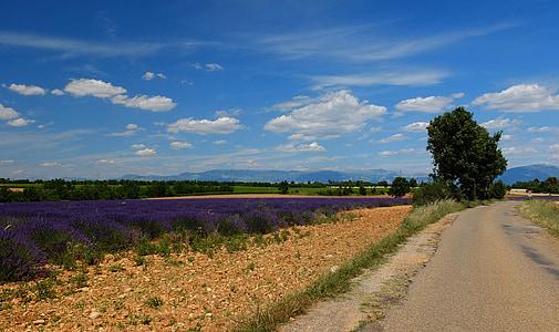 distància, carretera, lavanda, França, Provença, sud de França