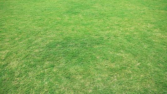 pozadie, pozadia, pozadia pracovnej plochy, tapety na plochu, tráva, lúky, tráva pôdy