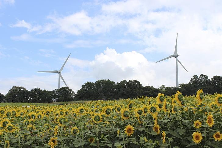 Fukushima, plateau de Nunobiki, tournesol, turbine de vent, été