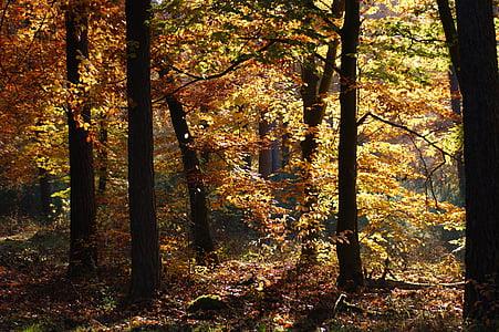 jeseni, gozd, dreves, stran, narave, listi, padec barve