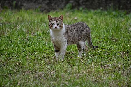 cat, feline, animal, domestic animal, cat eyes, alley cat, cat head