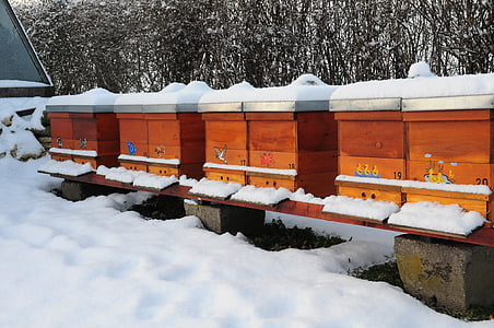 l'hivern, ruscs d'abelles, natura, abelles, rusc d'abelles, abella de la mel, jardí