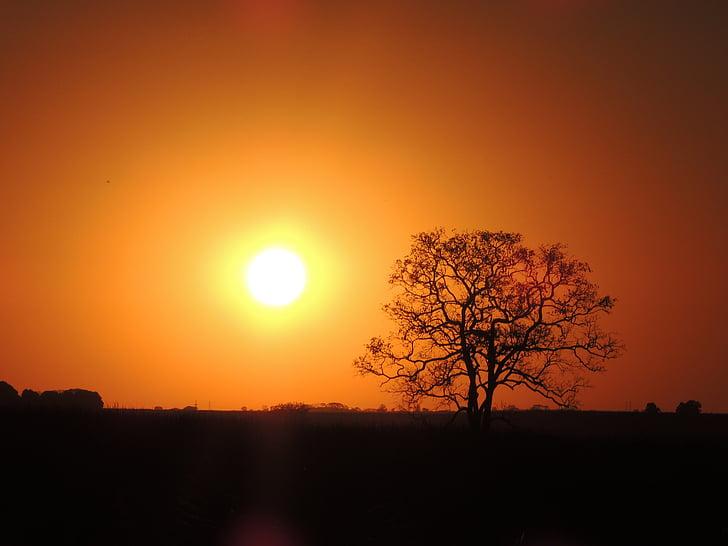 Sol, träd, genom, solnedgång, naturen, siluett, solen
