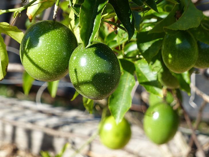 fruita de la passió, vinya, verd