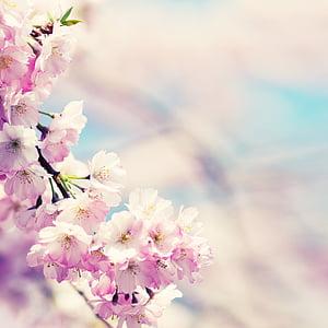 flowers, bud, pink, blossom, bloom, plant, close