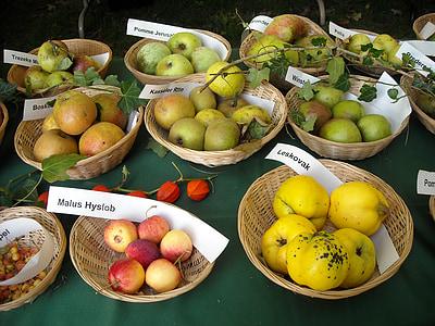 사과, 과일, 과일, pomology, 과일 인식, 음식, 건강 한