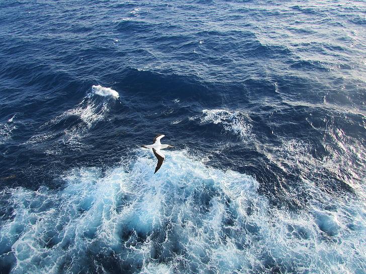 martı, kuş, okyanus