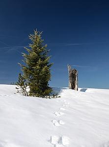 Zimní, sníh, Zimní, Příroda, Zimní sen, zimní les, zasněžené