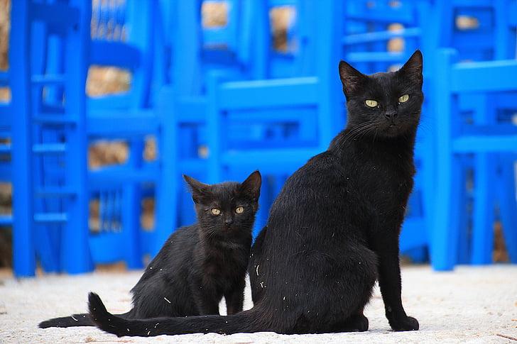 Zdarma černá kočička pics.com