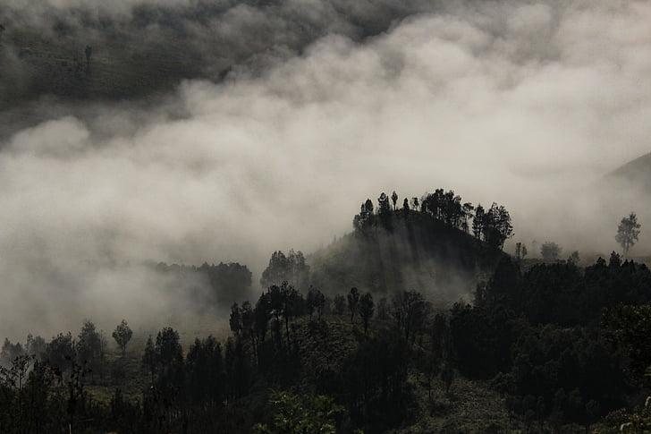 foggy, tree, landscape, fog, nature, autumn, season