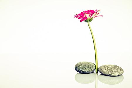 Wellness, À tes souhaits, harmonie, récupération, Mettez-vous à l'aise, méditation, Yoga