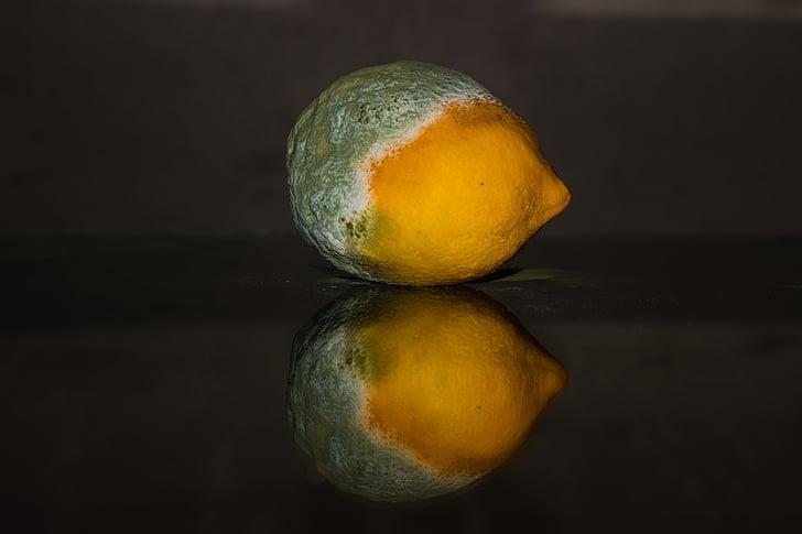 llimona, podrit, fruita, groc, verd, motlle, fong