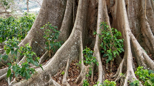 tree, roots, tree with roots, nature, tree roots, branch, forest