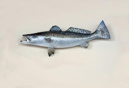 nước mặn, biển trout, cá hồi, cá, Câu cá, gắn kết, Taxidermy